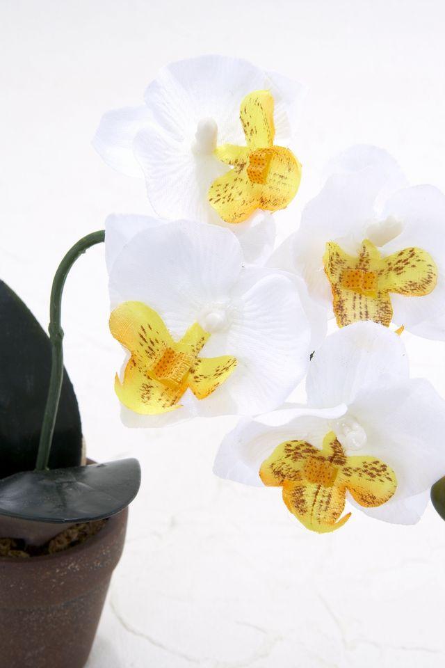 【造花アレンジメント】ミニ胡蝶蘭ポット(ホワイト×イエロー)