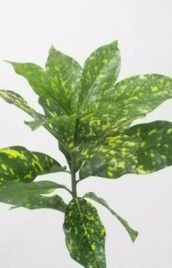 【造花 観葉植物】ケルベラポット(インテリアグリーン)